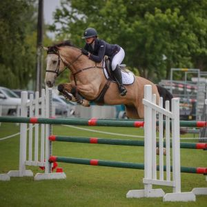 Wonderful Show Jumper, Eventer, Show Hunter