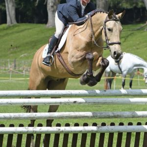 Horse for sale: Special Horse - Talented, Kind & Multi-Purpose