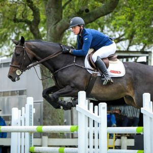 Horse for sale: FABULOUS SHOW JUMPER