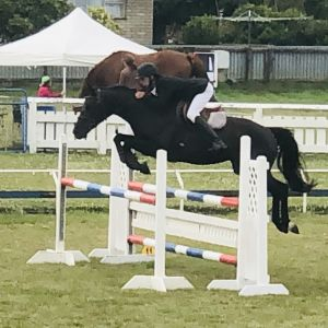 Awesome jr/amateur rider all rounder