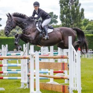Horse for sale: Jumping Schoolmaster!