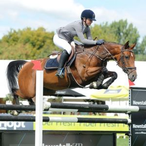 """Horse for sale: Top SJ mare,   """"Double J Image""""  - Young Rider/Junior/Pro am etc"""