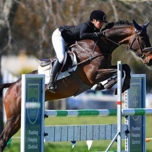 Horse for sale: Show Jumper - Potential Junior Rider