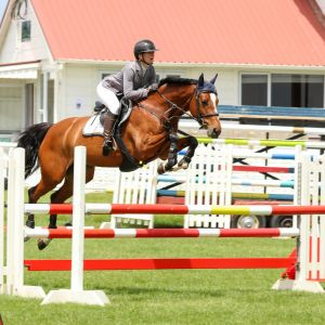 Horse for sale: Stunning Jumper - Potential PLUS!