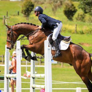 Horse for sale: FUTURE GRAND PRIX PROSPECT