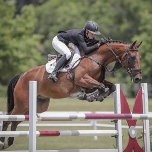 Outstanding Young Rider/Pro Am/Future Grand Prix horse