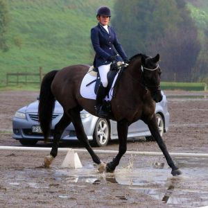 Horse for sale: Perfect Young Rider Mount Dressage Schoolmaster
