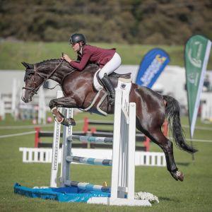 Horse for sale: AS Donnertello