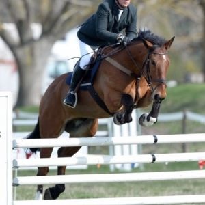 Horse for sale: Solid, Safe and Genuine Gelding