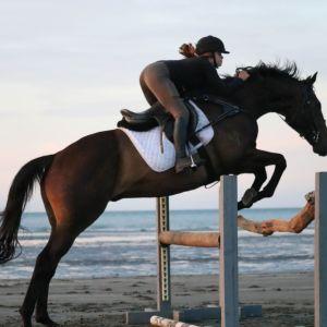 Horse for sale: genuine schoolmaster, a true unicorn