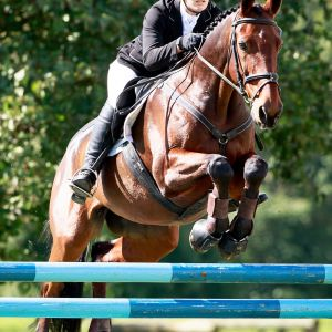 Horse for sale: Experienced 3* Eventer