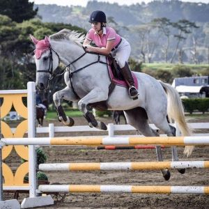 Horse for sale: Awesome pony club/competitive jumping hack!