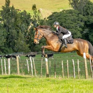 Horse for sale: Fun and Experienced Allrounder