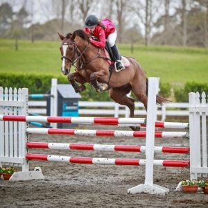 Horse for sale: Exceptionally Talented
