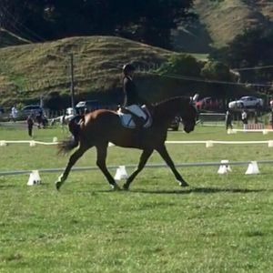 Horse for sale: Quiet/Experienced Warmblood