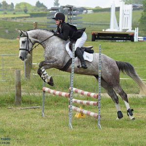 Horse for sale: Stunning Young Sporthorse