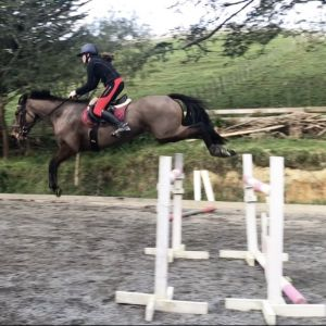 Horse for sale: Talented Mare