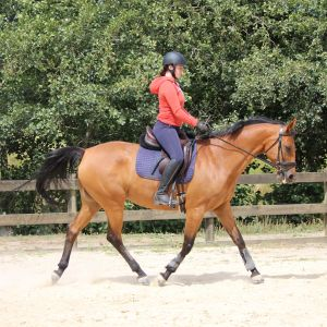 Horse for sale: Dressage schoolmistress - by Ramazotti