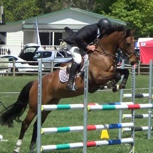 MULTI-PURPOSE WARMBLOOD SHOW JUMPER
