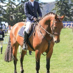 Horse for sale: Stunning Warmblood