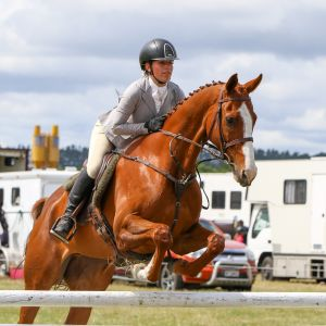 Horse for sale: All rounder PC/ fun hack