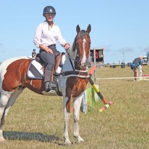 Horse for sale: ABSOLUTE SUPERSTAR IN THE MAKING! HIS UNSPOILED! Make him your own!