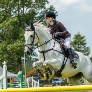 Horse for sale: Junior, Young, Amateur Horse