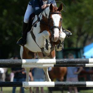 Horse for sale: Fun, Honest and careful Junior Rider/ Amateur horse