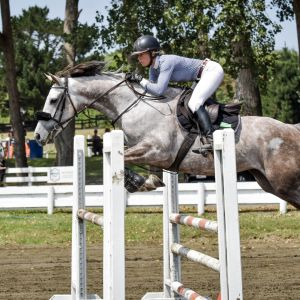 Horse for sale: Seriously talented 7 year old mare