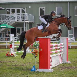 Horse for sale: Chello Xtreme