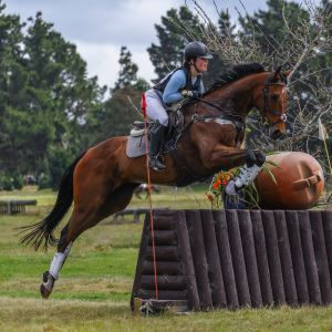 Horse for sale: Well Produced All Rounder