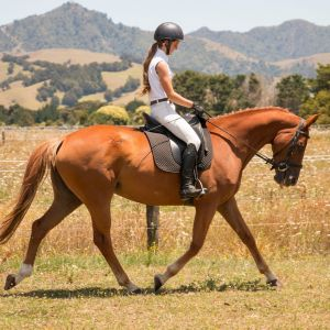 Horse for sale: warmblood mare