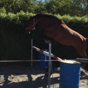 Quality warmblood - Truly Outstanding