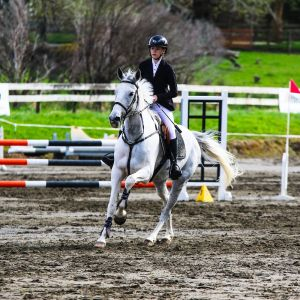 Horse for sale: Outstanding multi disciplined young mare