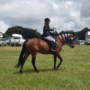 Horse for sale: Queen Regent LPE *FULL WIRE HUNTER*