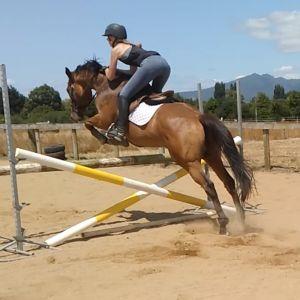 Horse for sale: Lionel - OTTB