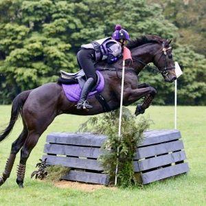Horse for sale: Handsome Allrounder/Pony Club Hack