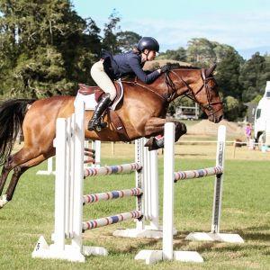 Horse for sale: Falstaff - Gorgeous Eventer / Show Jumper / Allrounder