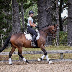 Horse for sale: Stylish Allrounder