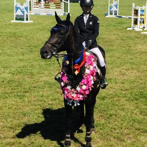 Horse for sale: Competitive Mini Prix/Young Rider