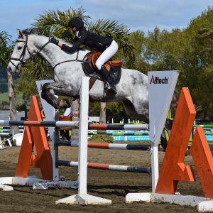 Horse for sale: Ultimate Junior Rider/ Amateur Rider mount