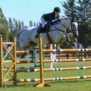 Cosmopolitan - Proven Young Rider Horse