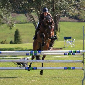 Horse for sale: Quality 5yr old TB Gelding