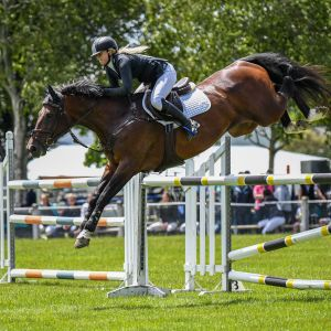 Perfect Junior / Young Rider Horse
