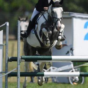 Horse for sale: Stunning Gisborne Bred Gelding