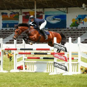 Horse for sale: Seriously Cool - Honest, Easy, 1.30m Jumper.