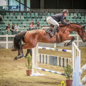 Horse for sale: Exceptional Jumper!