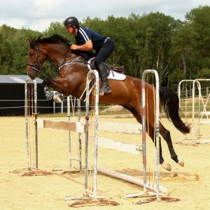 Outstanding Upcoming Showjumper