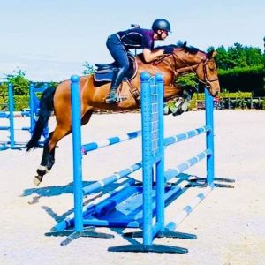 Horse for sale: 5yo Clearway Gelding
