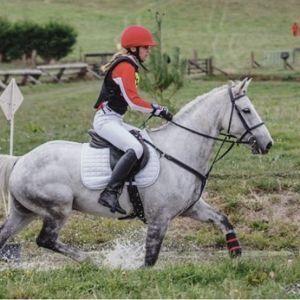 Kabo Sporthorse/Schoolmaster